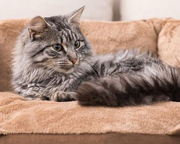 best cat beds - featured