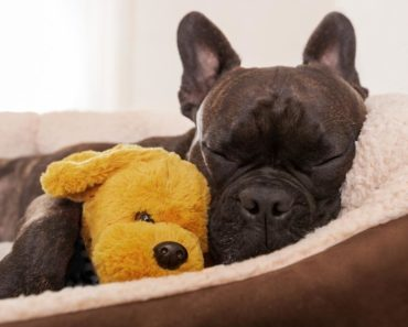 best dog beds for small dogs - featured