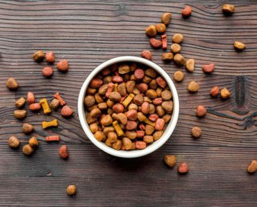 best dry dog food - featured