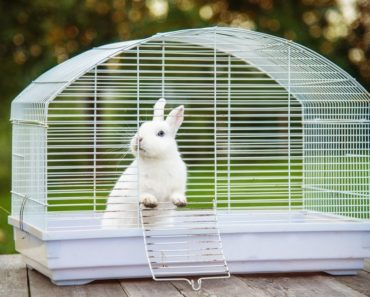 best rabbit cages - featured
