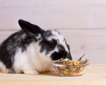 best rabbit food - featured