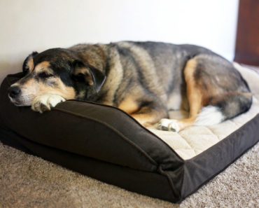best dog beds for large dogs - featured