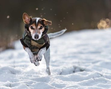 best dog jackets for winter - featured