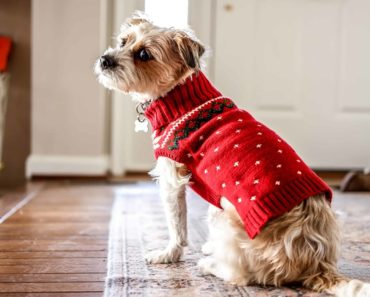 best dog sweaters - featured