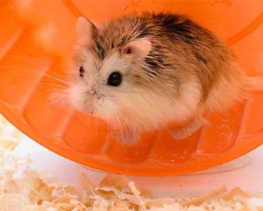 best hamster toys - featured