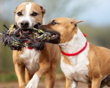 best indestructible dog toys - featured