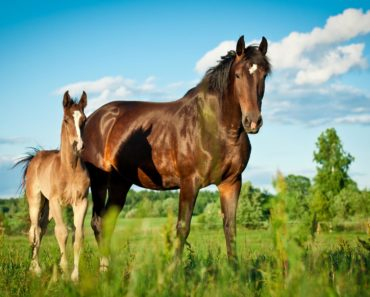 how to breed horses - featured