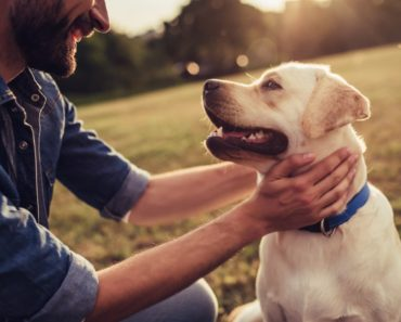 how to care for dogs - featured