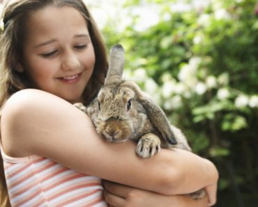 how to care for rabbits - featured
