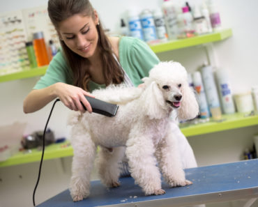 how to groom a dog - featured