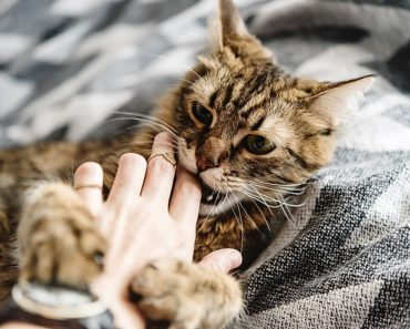 how to stop a cat from biting - featured