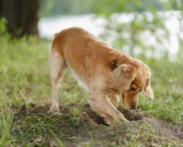 how to stop a dog from digging - featured
