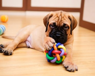 best chew toys for puppies - featured
