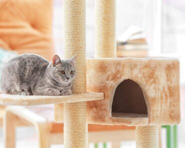 Best Cat Trees - featured