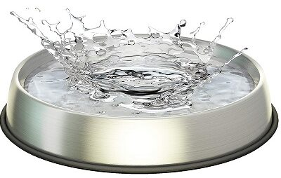 Best Cat Water Bowls - Dr. Catsby