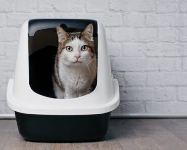 best cat litter boxes - featured